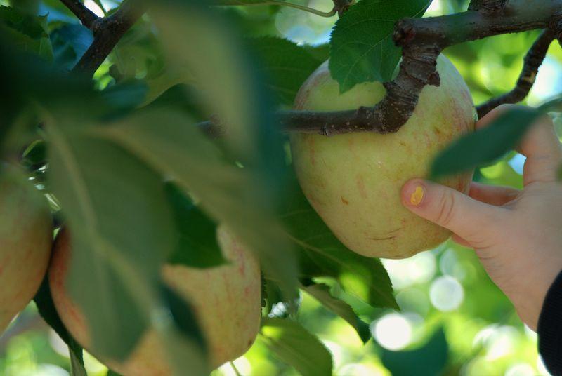 Gray Apple Hand
