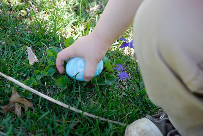 Gray Egg Thief 3