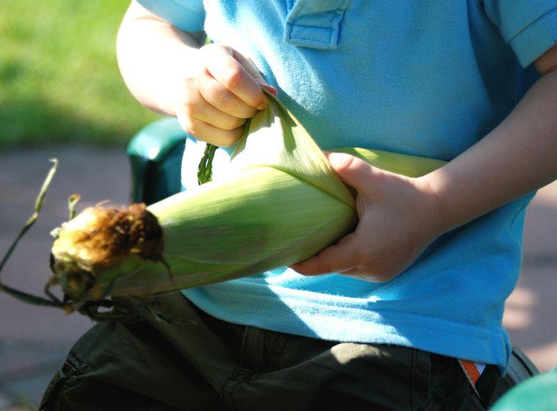 Corn4