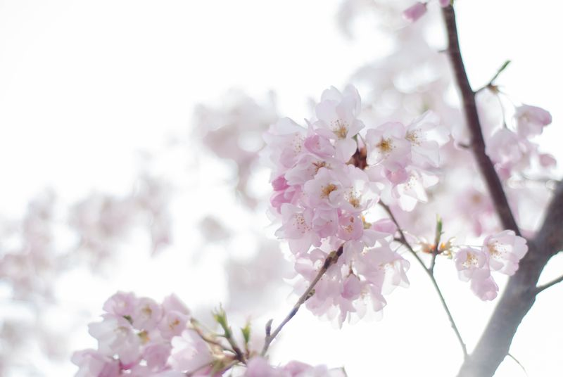 Blossoms-0405