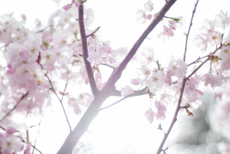 Blossoms-0404