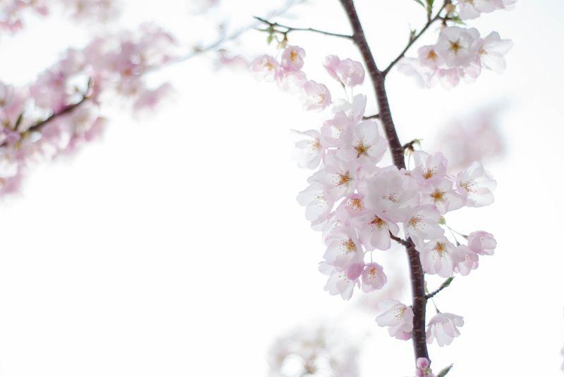 Blossoms-0406