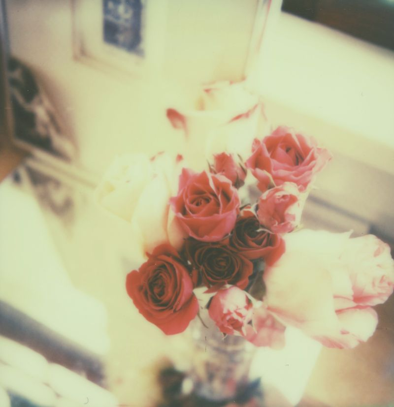 Roses,impossibleproject,px70
